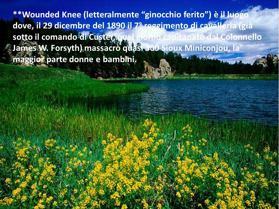 **Wounded Knee (letteralmente ginocchio ferito) è il luogo dove, il 29 dicembre del 1890 il 7° reggimento di cavalleria (già sotto il comando di Custe