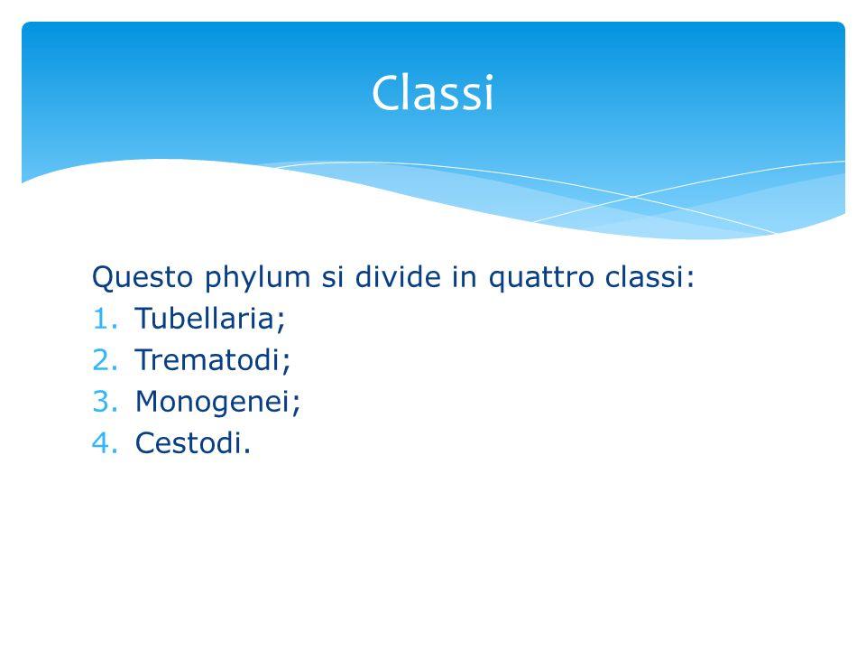 Questo phylum si divide in quattro classi: 1.Tubellaria; 2.Trematodi; 3.Monogenei; 4.Cestodi. Classi