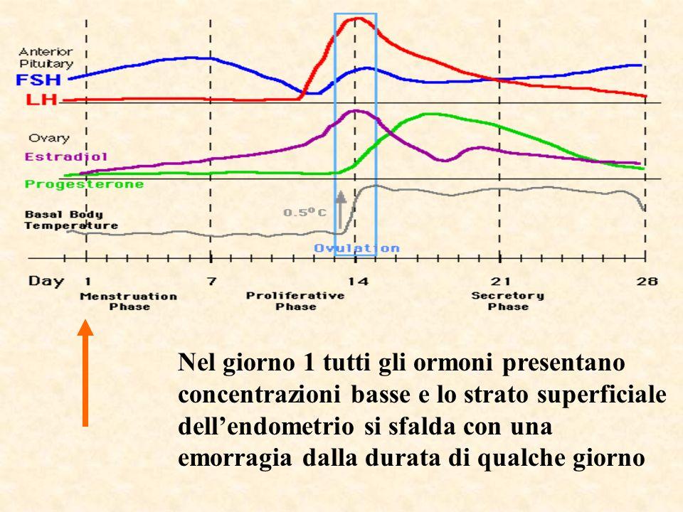 Nel giorno 1 tutti gli ormoni presentano concentrazioni basse e lo strato superficiale dellendometrio si sfalda con una emorragia dalla durata di qual