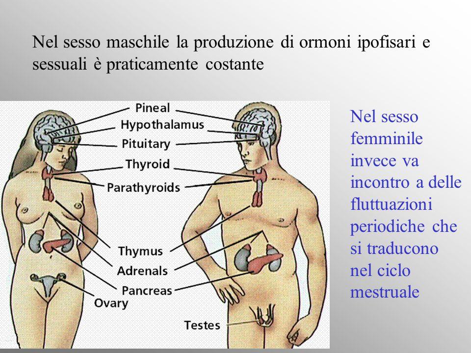 Subito dopo lovulazione lLH in elevata concentrazione provoca la trasformazione del follicolo in corpo luteo