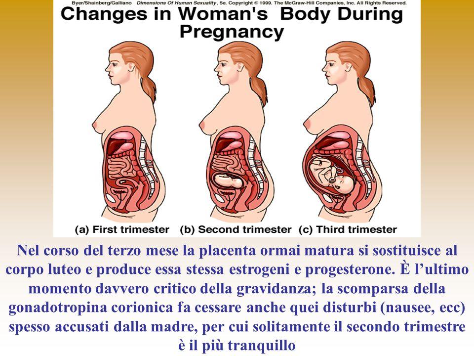 Nel corso del terzo mese la placenta ormai matura si sostituisce al corpo luteo e produce essa stessa estrogeni e progesterone. È lultimo momento davv
