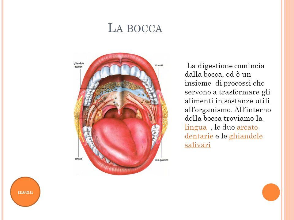 L A BOCCA menu La digestione comincia dalla bocca, ed è un insieme di processi che servono a trasformare gli alimenti in sostanze utili allorganismo.