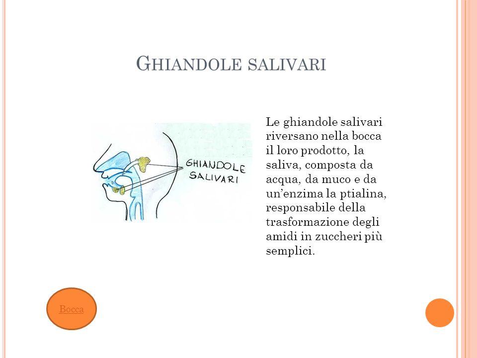 G HIANDOLE SALIVARI Bocca Le ghiandole salivari riversano nella bocca il loro prodotto, la saliva, composta da acqua, da muco e da unenzima la ptialin