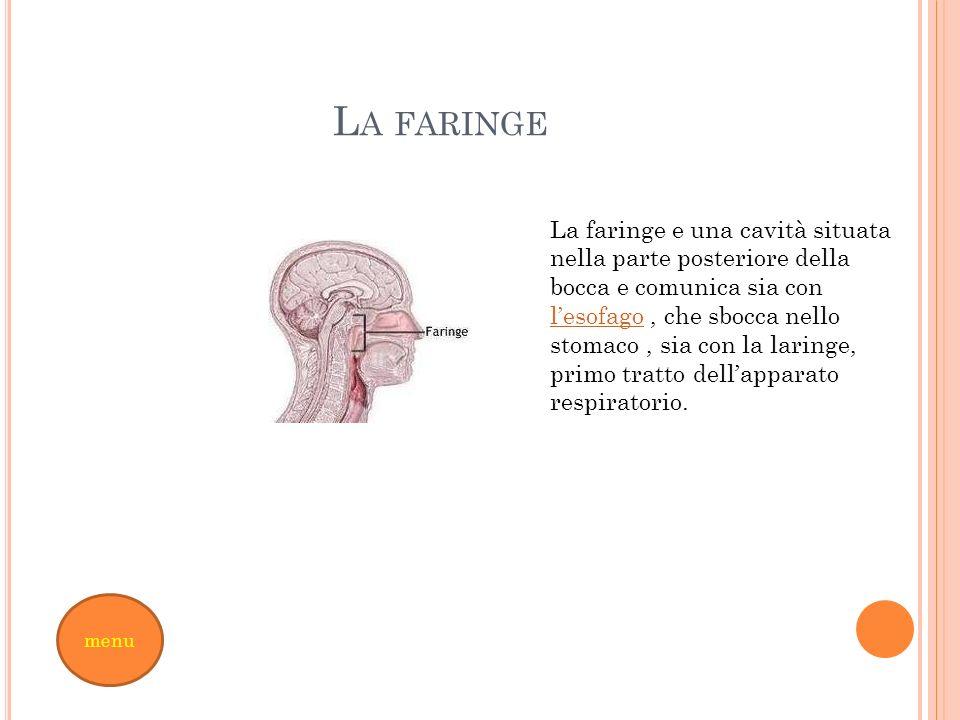 L A FARINGE La faringe e una cavità situata nella parte posteriore della bocca e comunica sia con lesofago, che sbocca nello stomaco, sia con la larin