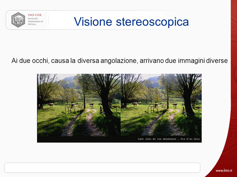 Visione stereoscopica Ai due occhi, causa la diversa angolazione, arrivano due immagini diverse