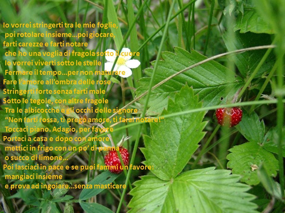 Io vorrei stringerti tra le mie foglie, poi rotolare insieme…poi giocare, farti carezze e farti notare che ho una voglia di fragola sotto il cuore Io