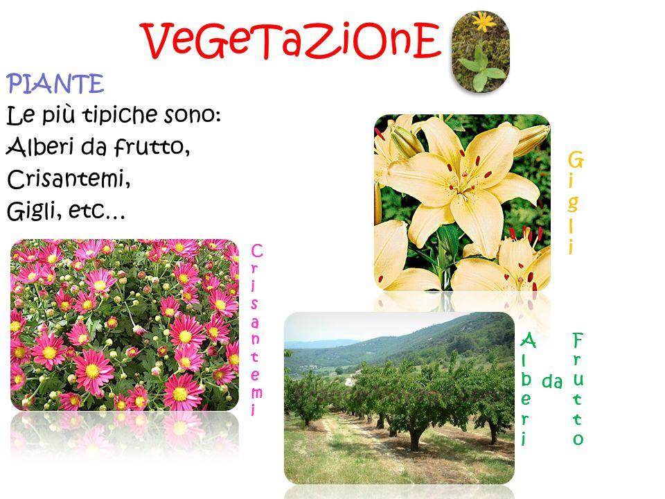 VeGeTaZiOnE PIANTE Le più tipiche sono: Alberi da frutto, Crisantemi, Gigli, etc… G i g l i C r i s a n t e m i A l b e r i da F r u t t o