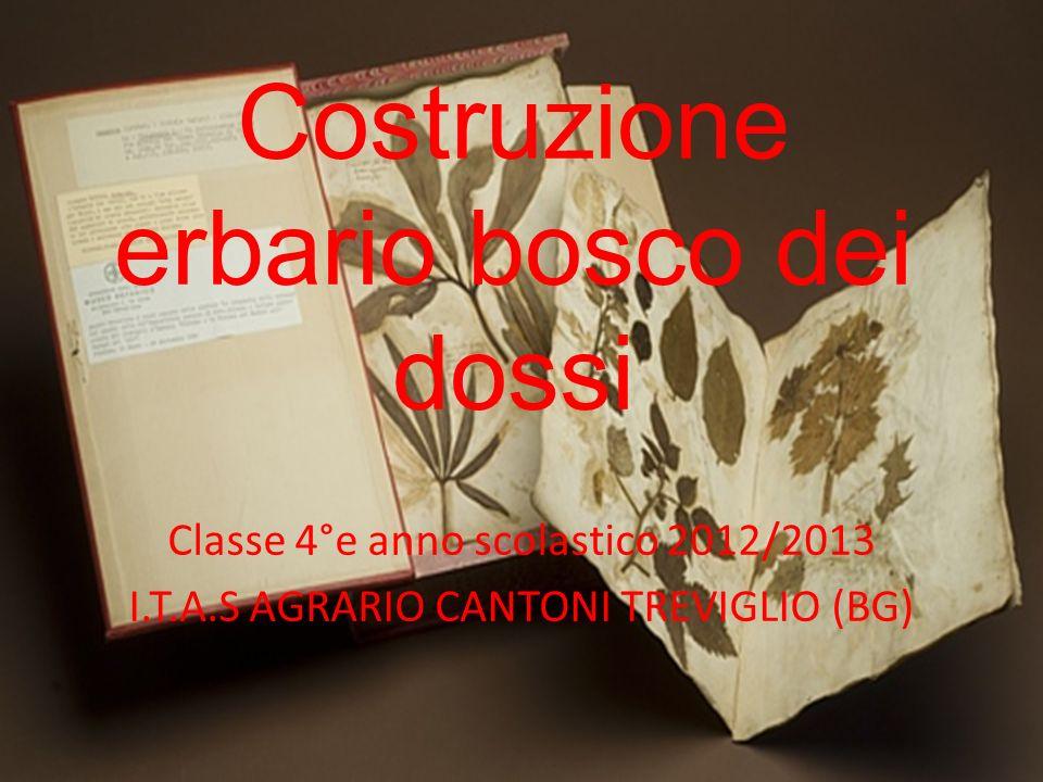 Costruzione erbario bosco dei dossi Classe 4°e anno scolastico 2012/2013 I.T.A.S AGRARIO CANTONI TREVIGLIO (BG)