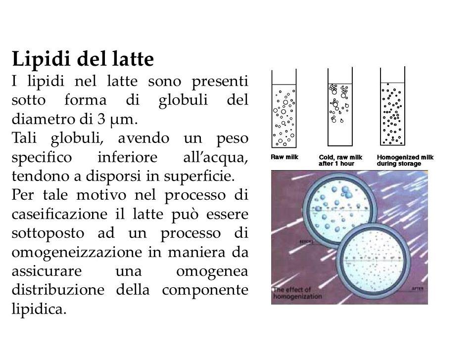Lipidi del latte I lipidi nel latte sono presenti sotto forma di globuli del diametro di 3 μm. Tali globuli, avendo un peso specifico inferiore allacq