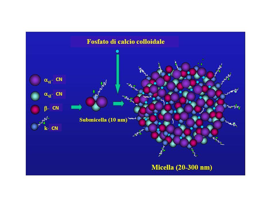 Fosfato di calcio colloidale CN