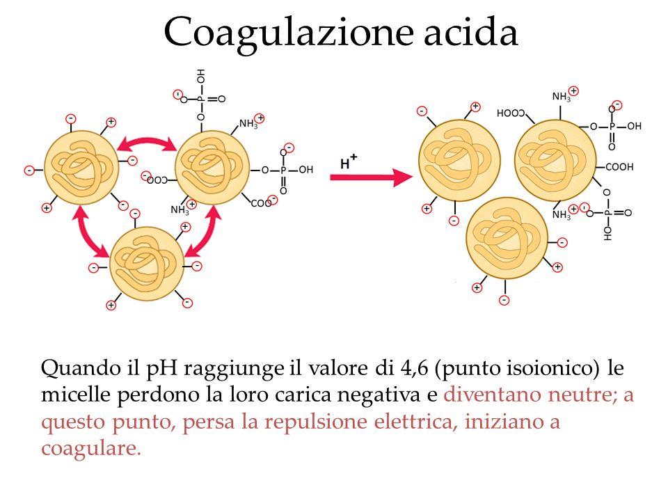 Quando il pH raggiunge il valore di 4,6 (punto isoionico) le micelle perdono la loro carica negativa e diventano neutre; a questo punto, persa la repu