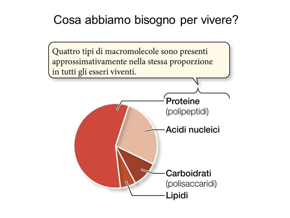 Le proteine del latte possono essere divise in due categorie: le caseine e le sieroproteine.