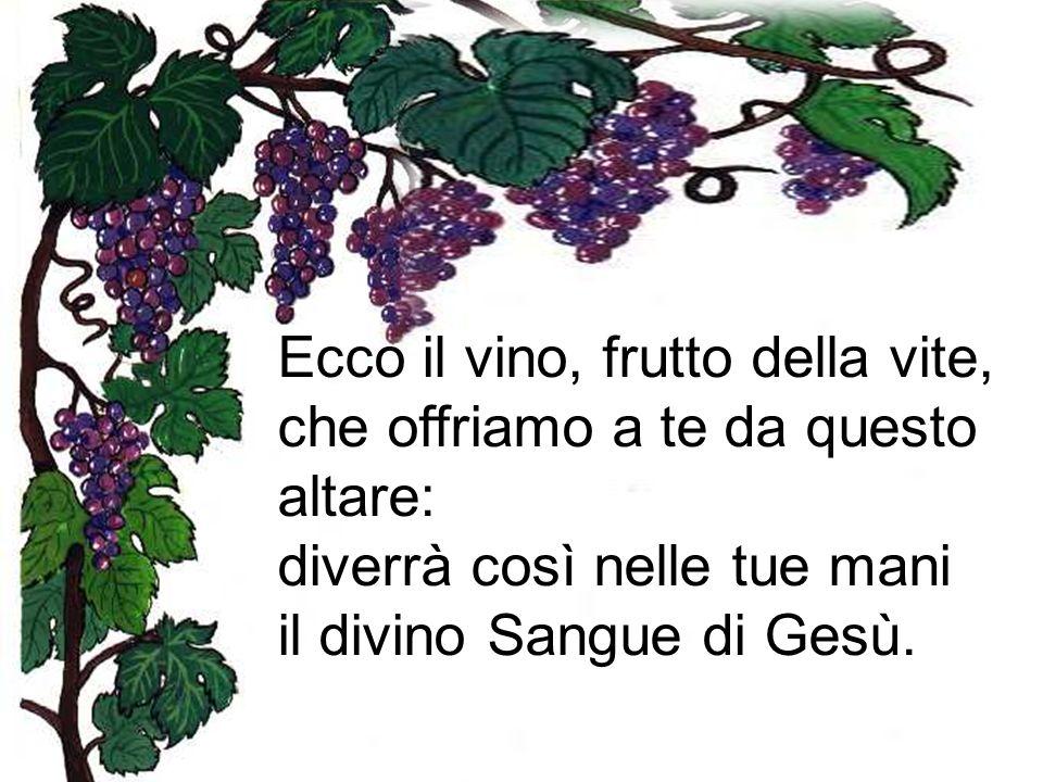 Ecco il vino, frutto della vite, che offriamo a te da questo altare: diverrà così nelle tue mani il divino Sangue di Gesù.