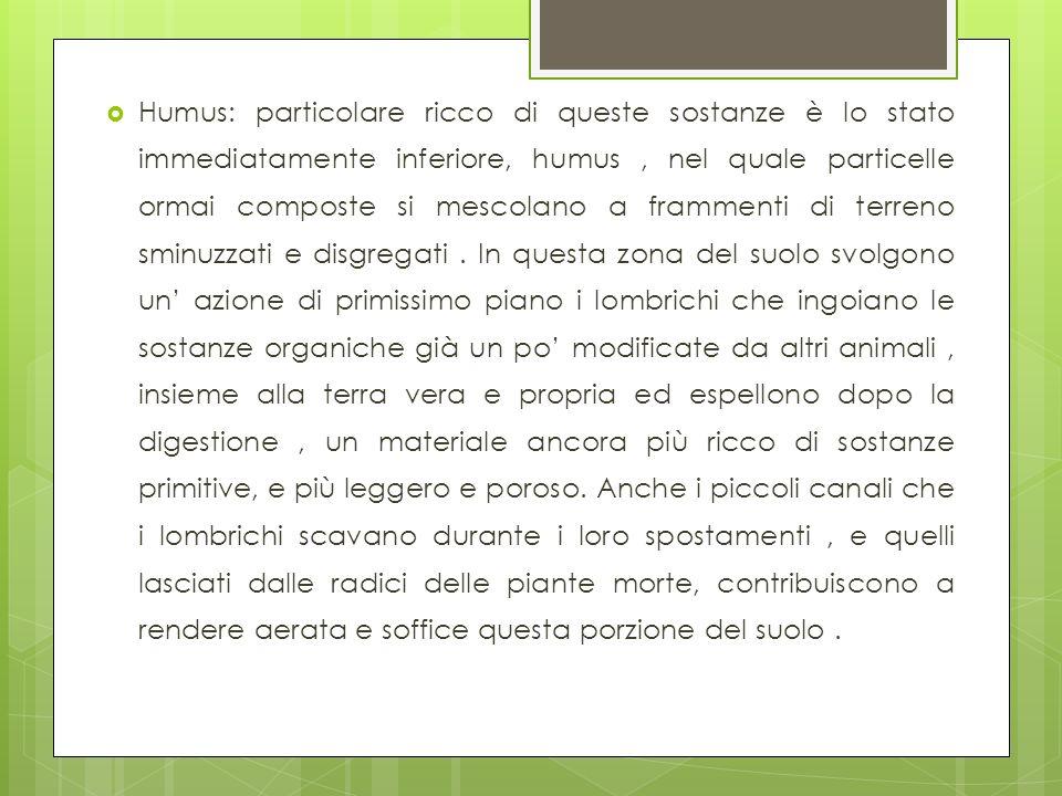 Humus: particolare ricco di queste sostanze è lo stato immediatamente inferiore, humus, nel quale particelle ormai composte si mescolano a frammenti d