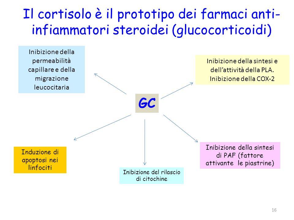 16 GC Inibizione della permeabilità capillare e della migrazione leucocitaria Inibizione della sintesi e dellattività della PLA. Inibizione della COX-