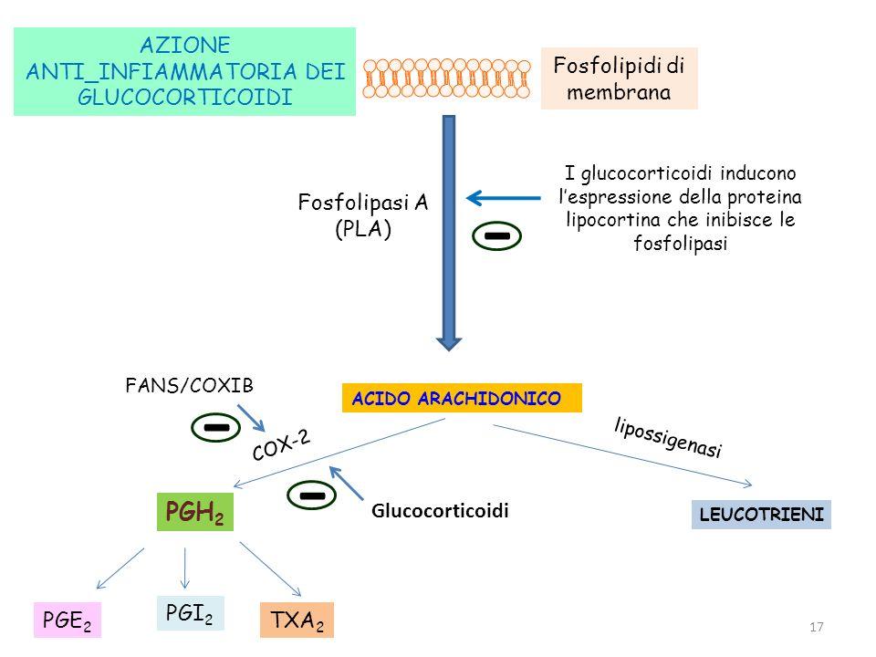 17 ACIDO ARACHIDONICO Fosfolipidi di membrana Fosfolipasi A (PLA) COX-2 lipossigenasi I glucocorticoidi inducono lespressione della proteina lipocorti