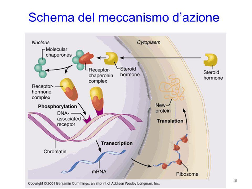 Schema del meccanismo dazione 48
