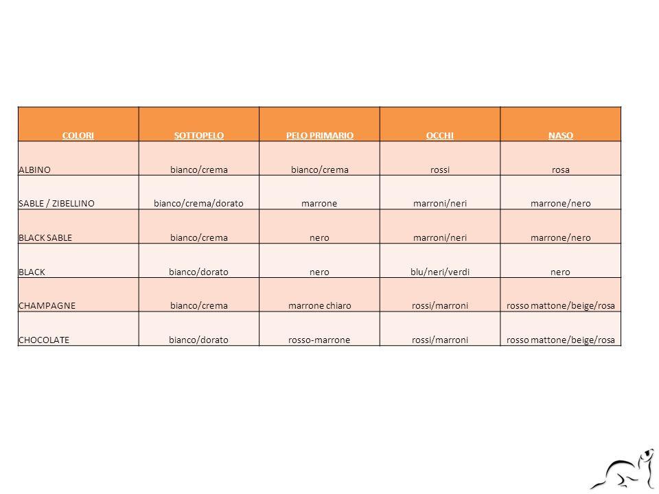 COLORISOTTOPELOPELO PRIMARIOOCCHINASO ALBINObianco/crema rossirosa SABLE / ZIBELLINObianco/crema/doratomarronemarroni/nerimarrone/nero BLACK SABLEbian