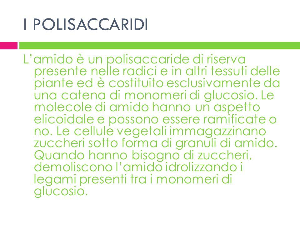 I POLISACCARIDI Lamido è un polisaccaride di riserva presente nelle radici e in altri tessuti delle piante ed è costituito esclusivamente da una caten