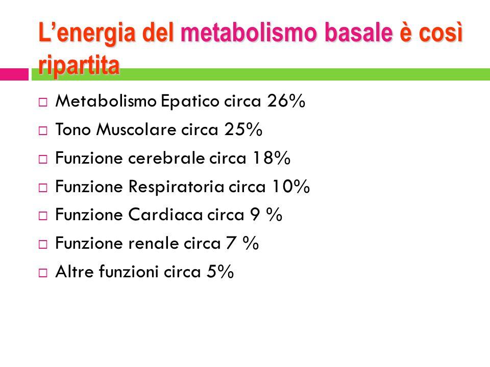 Lenergia del metabolismo basale è così ripartita Metabolismo Epatico circa 26% Tono Muscolare circa 25% Funzione cerebrale circa 18% Funzione Respirat