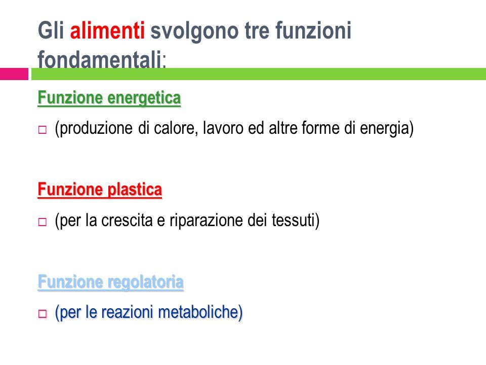 Gli alimenti svolgono tre funzioni fondamentali : Funzione energetica (produzione di calore, lavoro ed altre forme di energia) Funzione plastica (per
