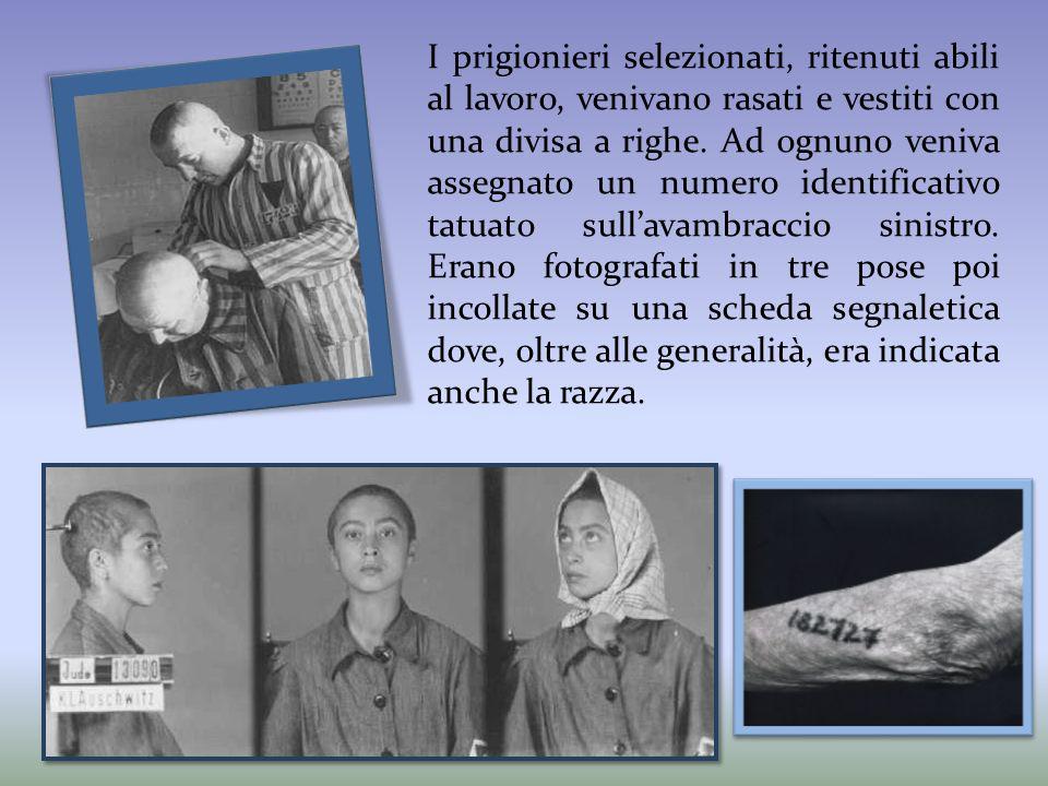 I prigionieri selezionati, ritenuti abili al lavoro, venivano rasati e vestiti con una divisa a righe. Ad ognuno veniva assegnato un numero identifica
