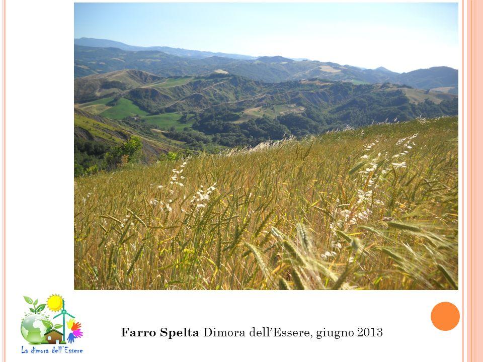 Farro Spelta Dimora dellEssere, giugno 2013