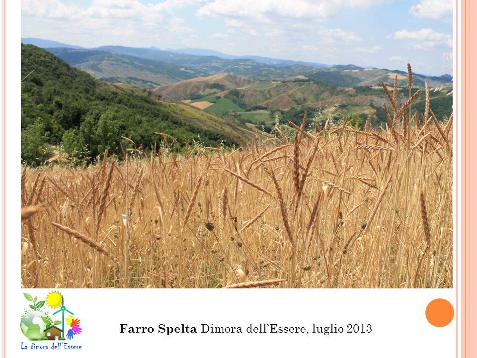 Farro Spelta Dimora dellEssere, luglio 2013