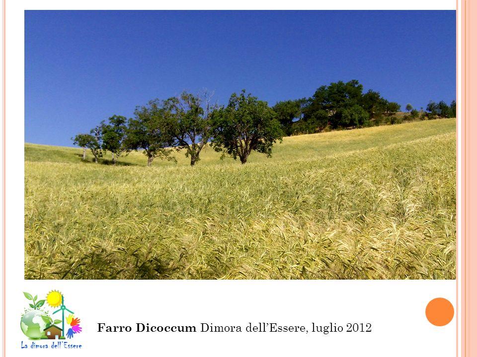 Farro Dicoccum Dimora dellEssere, luglio 2012
