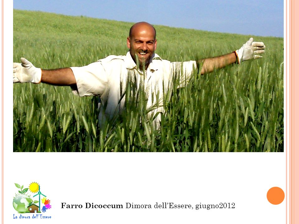 Farro Dicoccum Dimora dellEssere, giugno2012