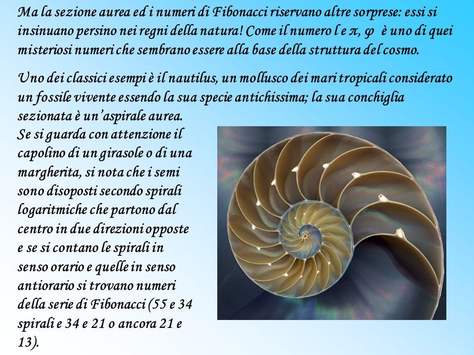 Ma la sezione aurea ed i numeri di Fibonacci riservano altre sorprese: essi si insinuano persino nei regni della natura! Come il numero l e π, φ è uno