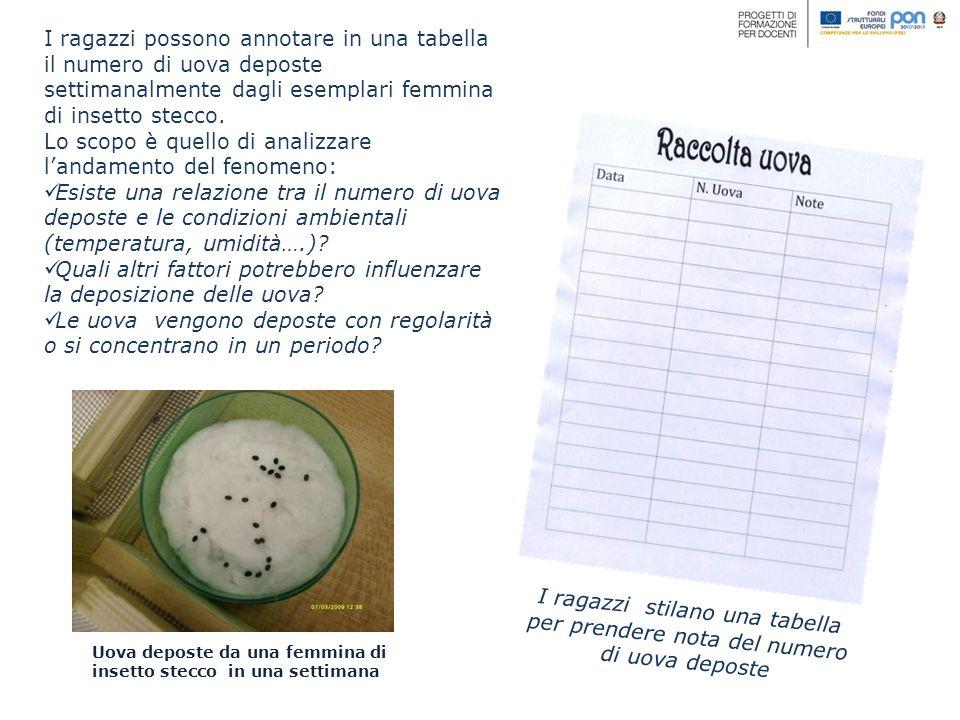 I ragazzi possono annotare in una tabella il numero di uova deposte settimanalmente dagli esemplari femmina di insetto stecco. Lo scopo è quello di an