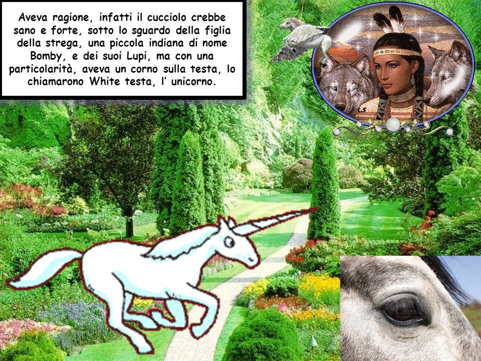 Aveva ragione, infatti il cucciolo crebbe sano e forte, sotto lo sguardo della figlia della strega, una piccola indiana di nome Bomby, e dei suoi Lupi, ma con una particolarità, aveva un corno sulla testa, lo chiamarono White testa, l unicorno.