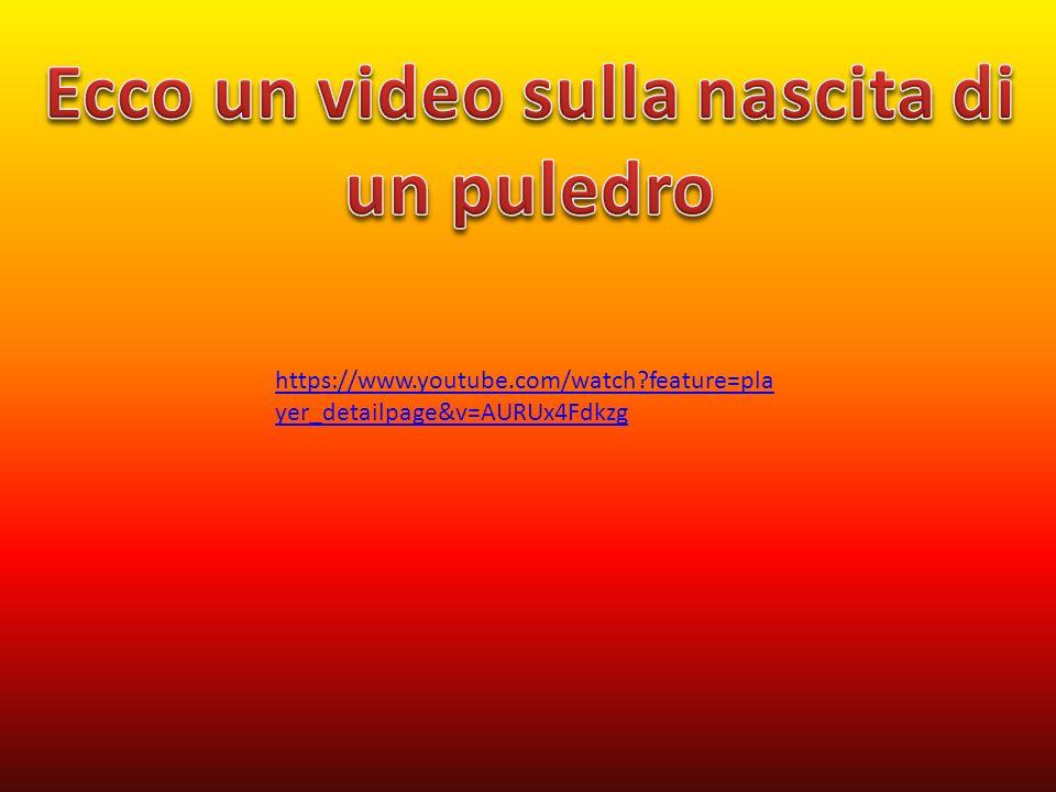 https://www.youtube.com/watch?feature=pla yer_detailpage&v=AURUx4Fdkzg