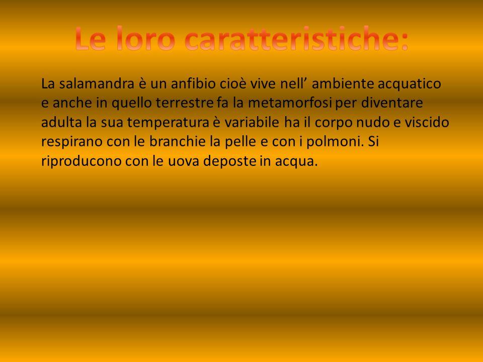 La salamandra è un anfibio cioè vive nell ambiente acquatico e anche in quello terrestre fa la metamorfosi per diventare adulta la sua temperatura è v