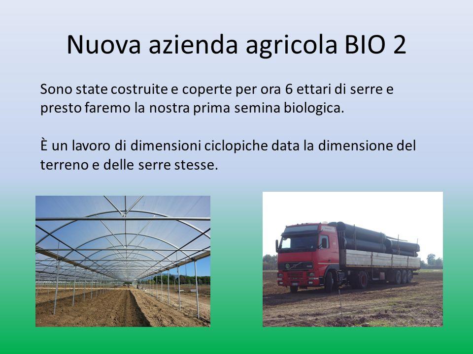 Nuova azienda agricola BIO 2 Sono state costruite e coperte per ora 6 ettari di serre e presto faremo la nostra prima semina biologica.