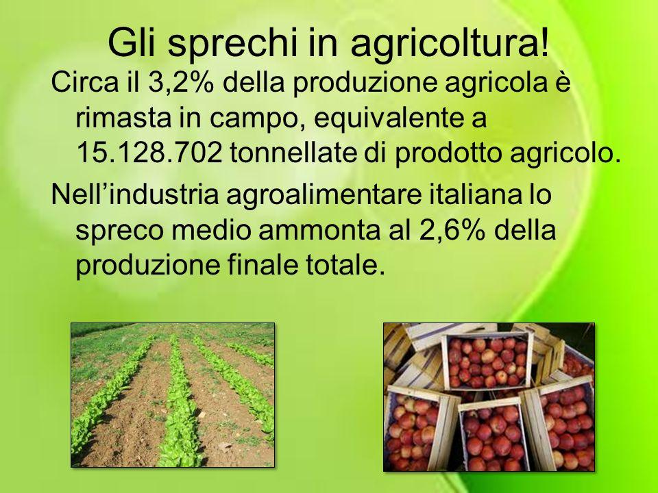 Gli sprechi in agricoltura! Circa il 3,2% della produzione agricola è rimasta in campo, equivalente a 15.128.702 tonnellate di prodotto agricolo. Nell