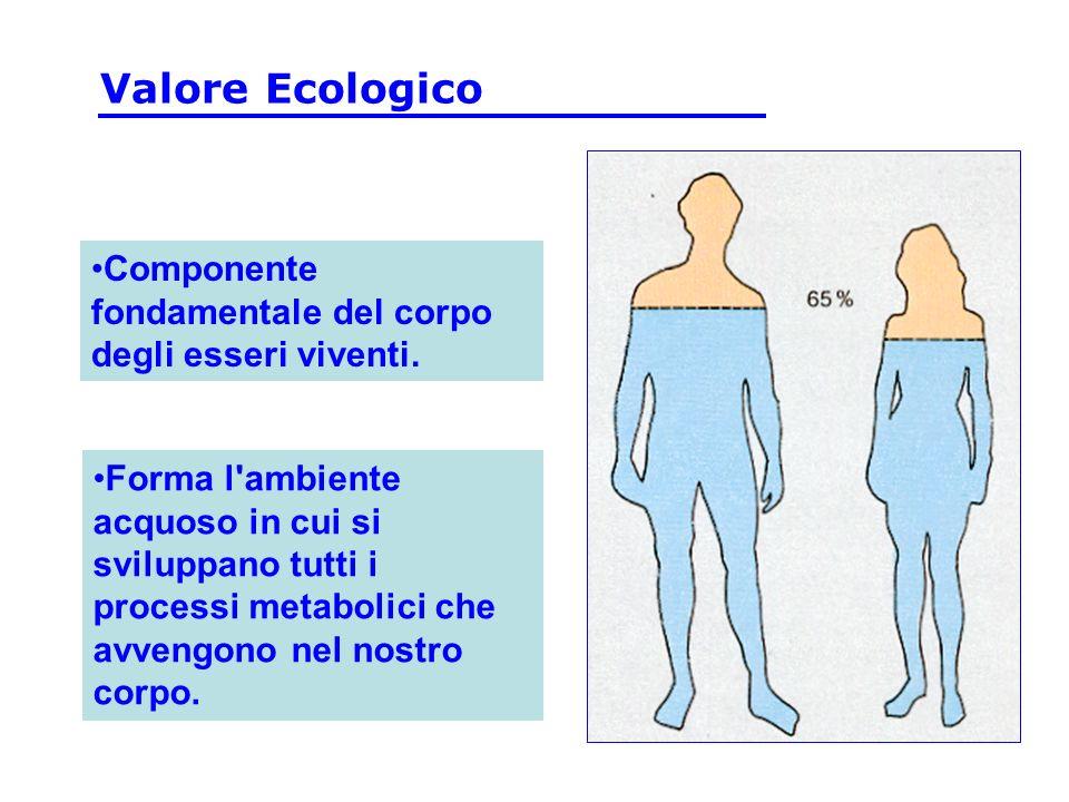 Componente fondamentale del corpo degli esseri viventi. Forma l'ambiente acquoso in cui si sviluppano tutti i processi metabolici che avvengono nel no