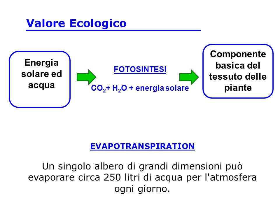 EVAPOTRANSPIRATION Un singolo albero di grandi dimensioni può evaporare circa 250 litri di acqua per l atmosfera ogni giorno.