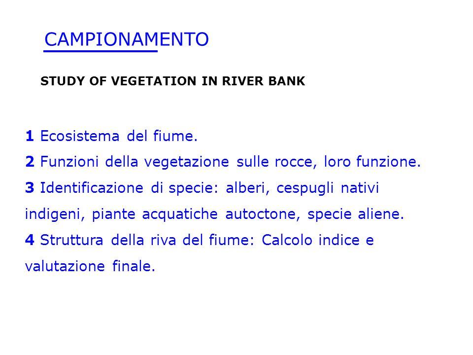 1 Ecosistema del fiume. 2 Funzioni della vegetazione sulle rocce, loro funzione. 3 Identificazione di specie: alberi, cespugli nativi indigeni, piante