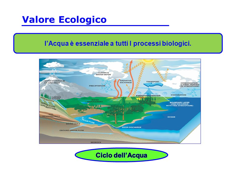 lAcqua è essenziale a tutti I processi biologici.. Valore Ecologico