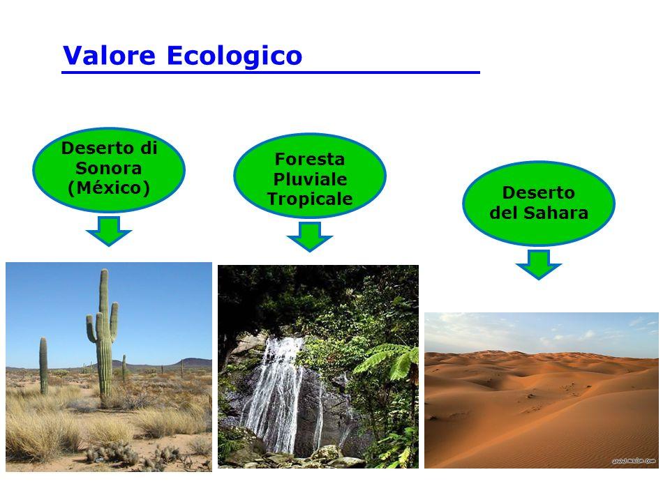 Deserto di Sonora (México) Foresta Pluviale Tropicale Deserto del Sahara Valore Ecologico