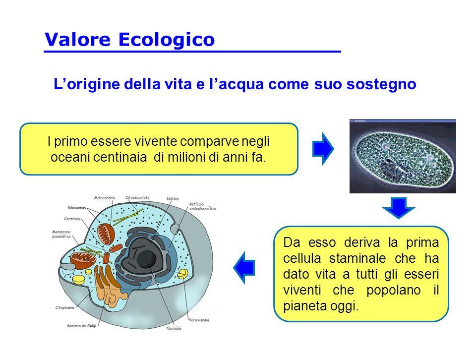 Lorigine della vita e lacqua come suo sostegno l primo essere vivente comparve negli oceani centinaia di milioni di anni fa.