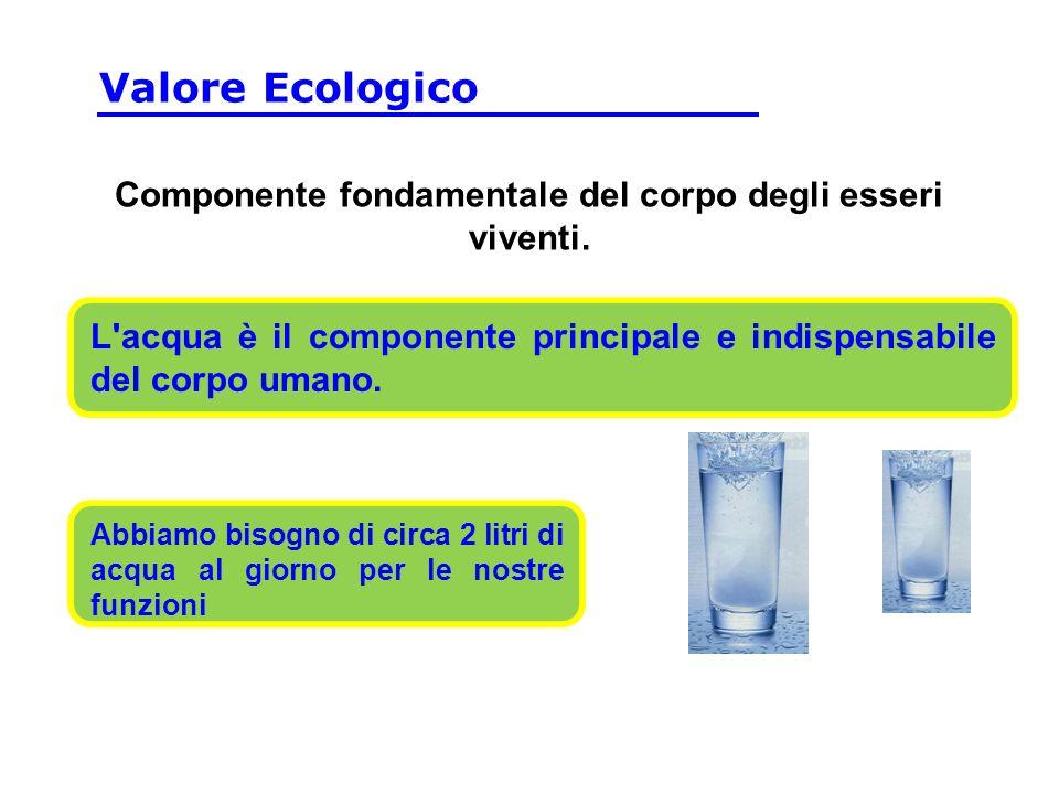L acqua è il componente principale e indispensabile del corpo umano.