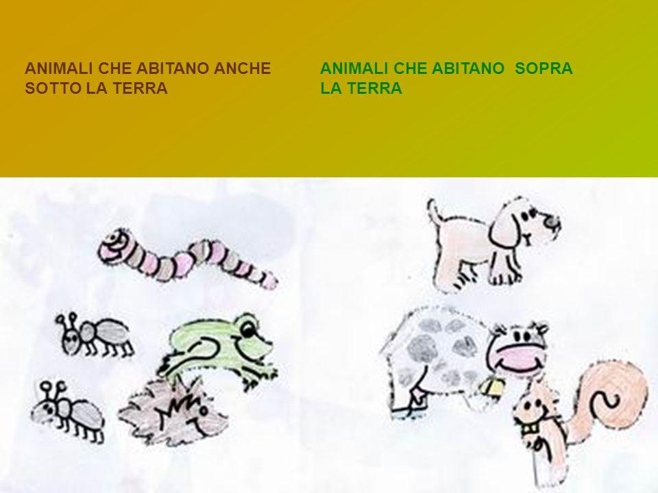 ANIMALI CHE ABITANO ANCHE SOTTO LA TERRA ANIMALI CHE ABITANO SOPRA LA TERRA