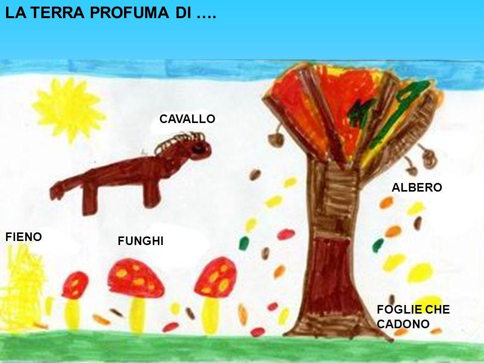 LA TERRA PROFUMA DI …. CAVALLO FUNGHI FIENO ALBERO FOGLIE CHE CADONO