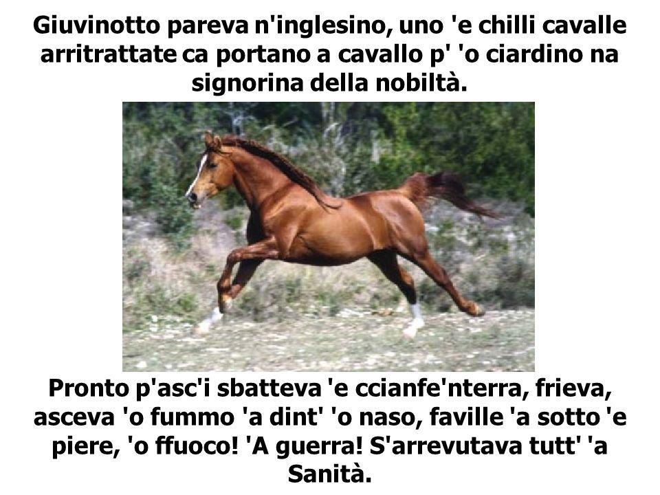 Giuvinotto pareva n'inglesino, uno 'e chilli cavalle arritrattate ca portano a cavallo p' 'o ciardino na signorina della nobiltà. Pronto p'asc'i sbatt