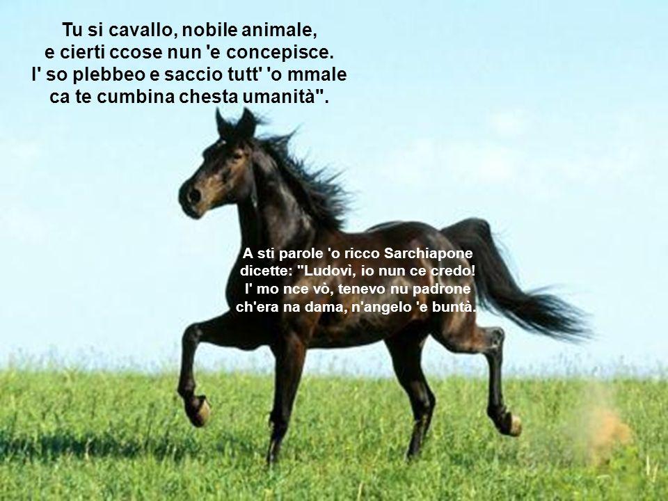 Tu si cavallo, nobile animale, e cierti ccose nun 'e concepisce. I' so plebbeo e saccio tutt' 'o mmale ca te cumbina chesta umanità