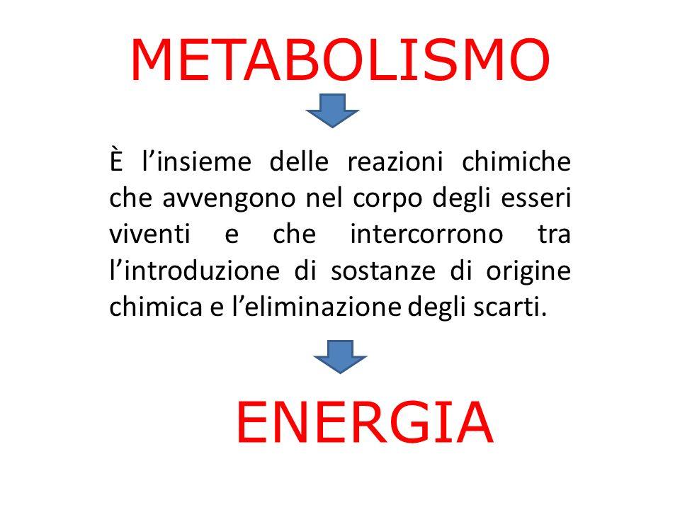 METABOLISMO È linsieme delle reazioni chimiche che avvengono nel corpo degli esseri viventi e che intercorrono tra lintroduzione di sostanze di origine chimica e leliminazione degli scarti.
