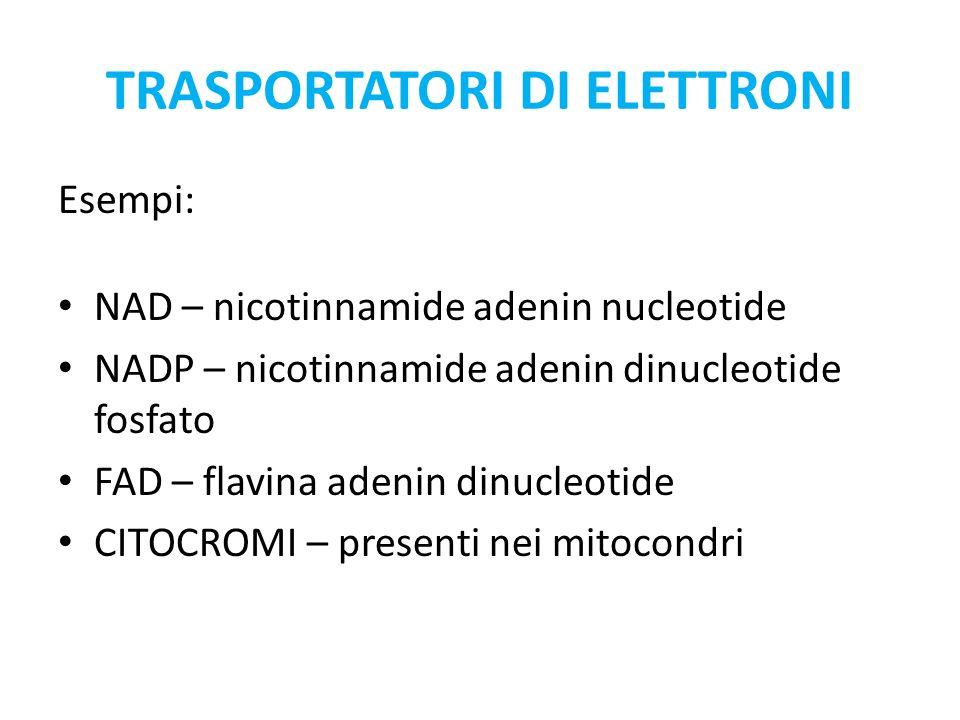 TRASPORTATORI DI ELETTRONI Esempi: NAD – nicotinnamide adenin nucleotide NADP – nicotinnamide adenin dinucleotide fosfato FAD – flavina adenin dinucleotide CITOCROMI – presenti nei mitocondri